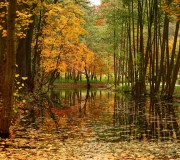 Jesień: Park