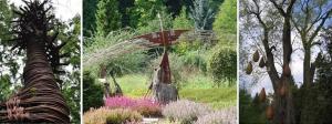 Wiklina w Arboretum, Bolestraszyce