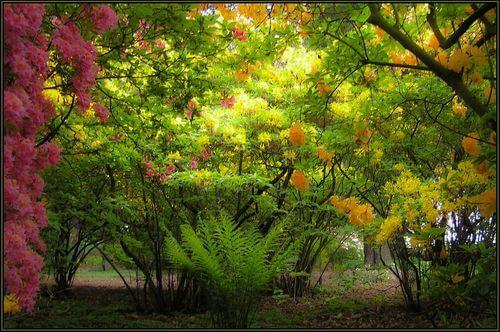 arboreta w Polsce