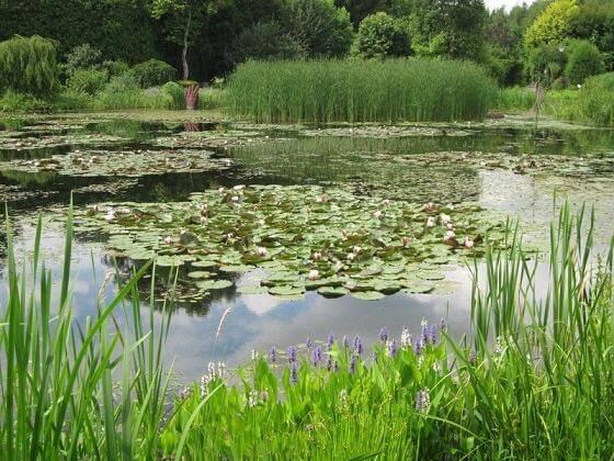 Staw w Arboretum Bolestraszyce